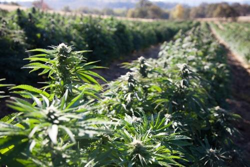 Hemp Farm Oregon