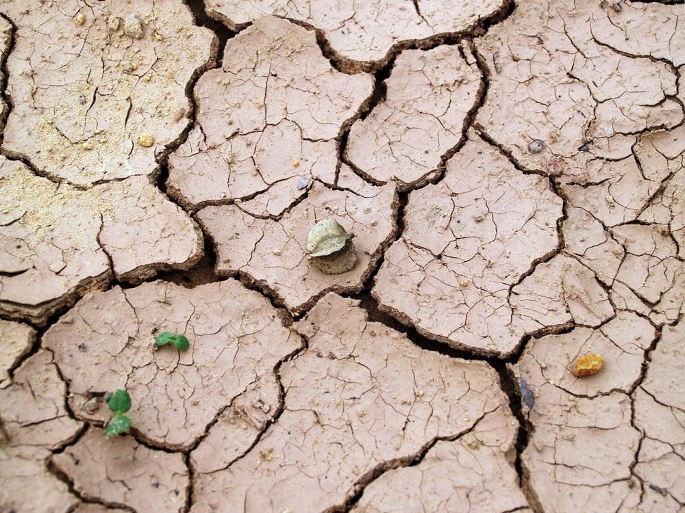 dry eart symbolizing dry human skin